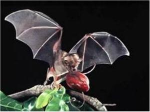 Fruit Bats.jpg
