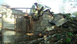Tree_On_roof_Typhoon_Nari_FORWEB