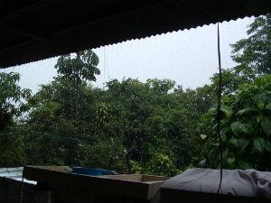 Tropics_Rain_FORWEB